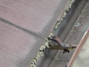 軒先のコケ,雨樋の詰まり,屋根材の劣化